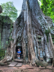 An Old Tree in Ta Prohm