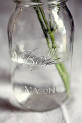 mason jar (Cate {S.}) Tags: flowers glass masonjar jar
