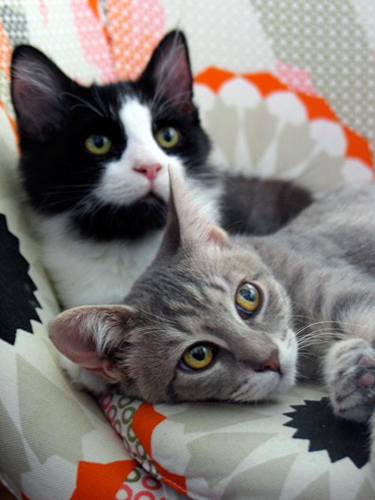 Max & Dot