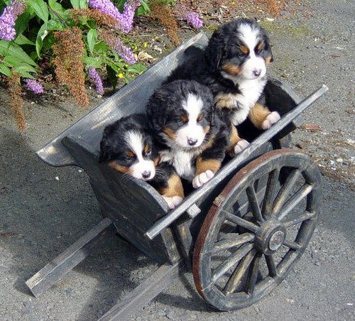 星星's puppies