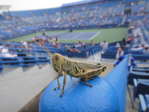 Grasshopper at the ATP in Cincinnati