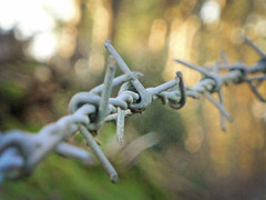A Bokeh of Barbed Wire (Digital Zoetrope) Tags: bokeh barbedwire 365 project365 fencefriday