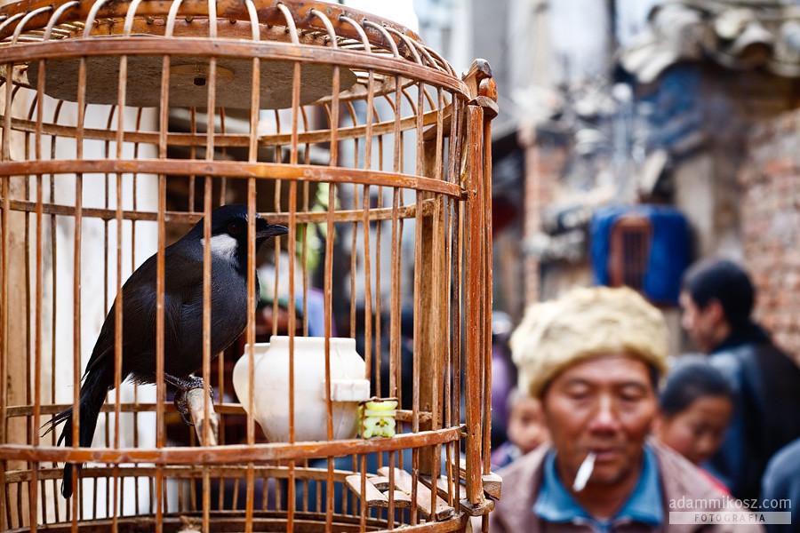 Adam Mikosz - Kunming - Bird Market