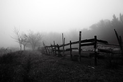 (Walter Daniel Fuhrmann) Tags: rural blancoynegro blackandwhite bn abandonado abandoned árboles trees niebla fog dark decay
