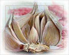 Aïe aïe Ail !... (*Jost49* (±Off)) Tags: plante ail garlic assiette canoneos7d canonefs18135isstm framing vignette proxi closeup