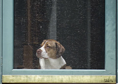 (Sarah-Vie) Tags: chien dog chiendanslaporte img9821