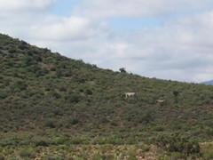 Zebra (thetouristguide) Tags: holiday southafrica vacances urlaub zebra trips sdafrika vacanza giro reise motorrad feiertag sudafrica motocicletta motocyclette africanwildlife tourne motorcycletours africanexperience privatetours lafriquedusud