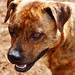 Bryndelyn, a female dog that needs a loving home to last forever...