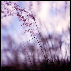 One (Lefty Jor) Tags: pink shadow red hk plant flower 120 6x6 film silhouette t hongkong day dof wind kodak bokeh hasselblad shade planar 500cm carlzeiss proxar 80mmf28 ektacolorpro160