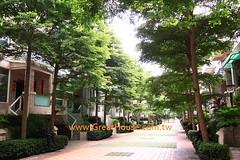 國泰市政尊園:小葉欖仁樹