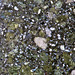 Rock365 : 28 06 2010 : Crystal Lithic Lapilli Tuff