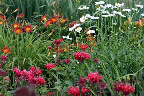 flower garden 142