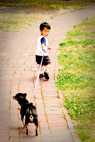 dogwalker-4
