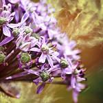 Textured wildflower thumbnail