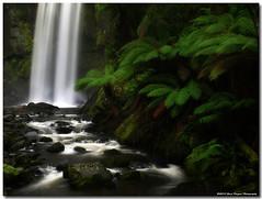 P7037615 (Steve Daggar) Tags: waterfall victoria greatoceanroad otways otway otwayranges
