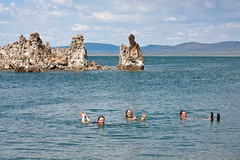 Swimming in Mono Lake