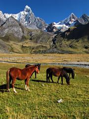 Horses-Jirishanca-Huayhuash Trek-Peru (mikemellinger) Tags: horses snow peru nature field trekking trek landscape scenery stream hiking hike andes circuit capped cordillera huayhuash ancash jirishanca