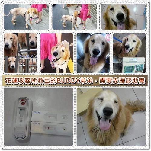 「需要支援認助養」花蓮收容所救出的黃金獵犬BUDDY弟弟,懇請贊助醫療資源,和助認養喔~隨手幫忙轉PO也是非常重要~謝謝您!20100710