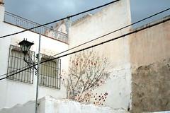 Wandmalerei in Velez Blanco, Andalusien