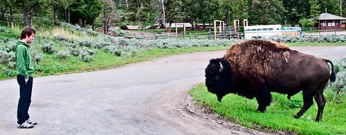 Yellowstone 07