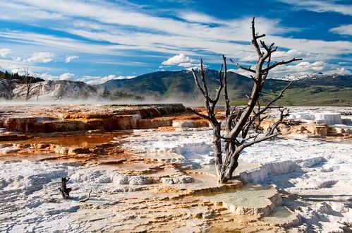 Yellowstone 31