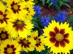 Flowers_610e