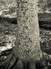 Lovers' Tree (katieharbath) Tags: bw tree blackwhite teddyrooseveltisland
