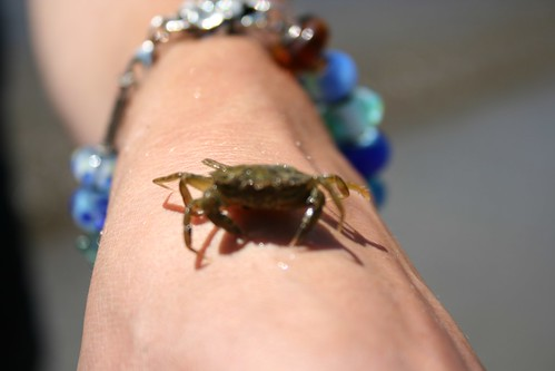 Out-of-focus crab