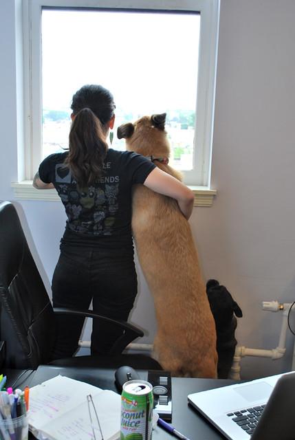 studio_dogs-6