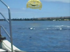 PS6 (Herb In Hawaii) Tags: ocean blue sea sky usa water clouds island hawaii boat video high waves pacific speedboat air platform sunny bluesky maui pacificocean goofingoff parasail hanging gliding motorboat lahaina parasailing sunnyday parachute towed openwater bluesea