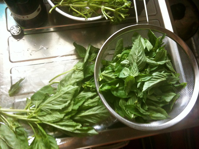 making basil paste