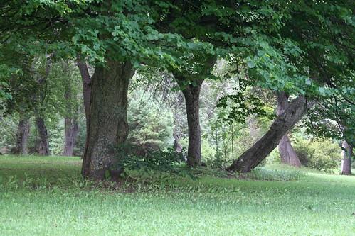 Cavendish Grove