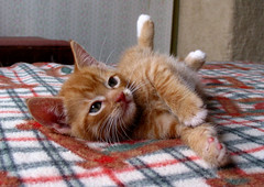 Tuffy Relaxing (whaas987) Tags: orange cat kitten tabby cutekitten beautifulkitten