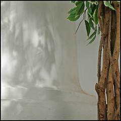 plant (*tara) Tags: church shadows pillar column intwined