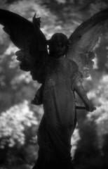 shade (Skink74) Tags: uk england blackandwhite bw film cemetery grave statue stone angel 35mm ir mono wings memorial dof ae1 bokeh hampshire shade infrared marker lichen 135 canonae1 rodinal hursley shodow f12 efke r72 fl58mmf12 canonfl58f12 ir820 filmdev:recipe=5080 ae1m002