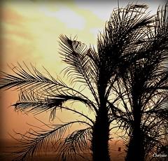Island Dreaming (Christie Spad) Tags: new trees sunset beach palm jersey picnik amiamoc