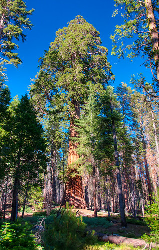 Sequoia National Park 16