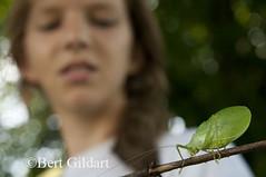 Leafbug-1