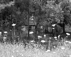 Forgotten Country house (**Ms Judi**) Tags: old flowers trees windows blackandwhite abandoned grass wisconsin weeds country forgotten wildflowers oldwood queenannelace msjudi judistevenson judippc photographybymsjudi countryhideaway forgottencountryhouse