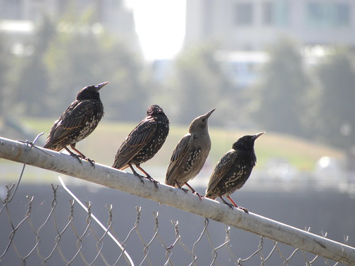 False Creek Birds