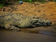 Crocs (rabbit.Hole) Tags: kenya masaimara