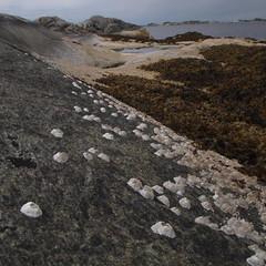 Midtre Roty I (Halvor Skurtveit) Tags: berg coast kyst rur skjell