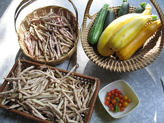 friday's harvest (julia:elise) Tags: beans yum gardening zucchini cherrytomatoes urbangardening seedsavers communitygardening heirloombeans andlotsofit backyardgardening drybeans sincetheraccoonseemstobeeating allmyfullsizedones ivebeenenjoying thecherrytomatoes