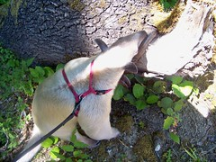 Pua sniffing a tree