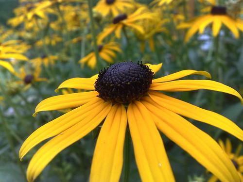 Gelbe Blumen. Keine Ahnung welche. Leider. Trotzdem schön.