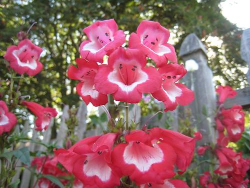 Flowers (492)