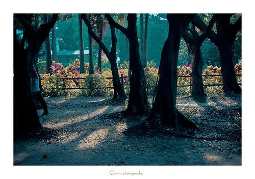 8月(二)森林系女孩