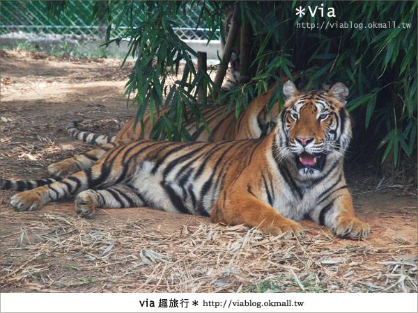 【關西六福莊】精彩秘探野生動物園/DIY手作/農趣樂~!22