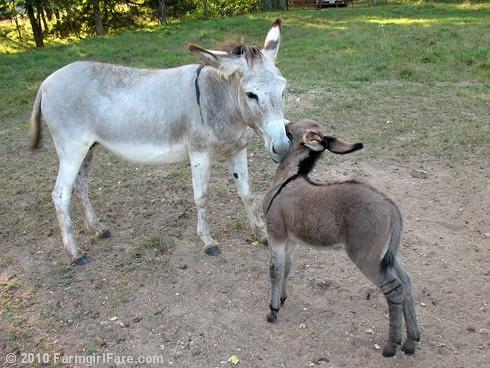Baby Donkey 6