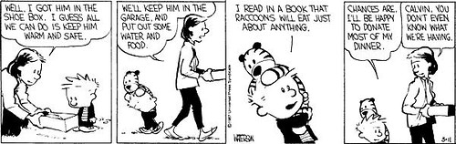Calvin and Hobbes Racoon p3